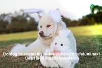 Kellemes húsvéti ünnepeket kívánunk minden kedves ügyfelünknek! – Das Haus Ingatlanközvetitő