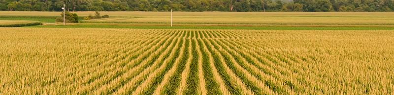 mezőgazdasági ingatlan értékbecslése