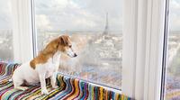 Kutya a lakásban